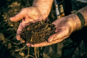 An elderly farmer holds a handful of fertile black soil in his h